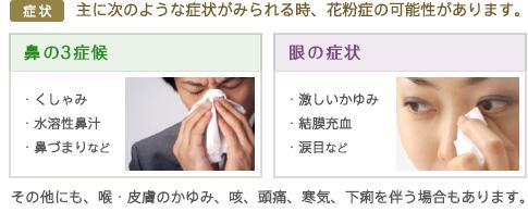 鼻の症状 / ・くしゃみ・水溶性鼻汁・鼻づまりなど - 眼の症状 / ・激しいかゆみ・結膜充血・涙目など
